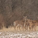 Chronic Wasting Disease Bill Unanimously Passes House Ag Committee