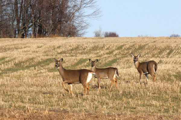 Game Commission Approves Hunting Regulation Changes