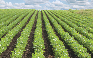Update on Dicamba
