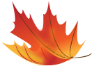orange and yellow maple leaf illustration