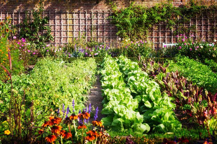 Nominations Sought for Urban Agriculture Panel