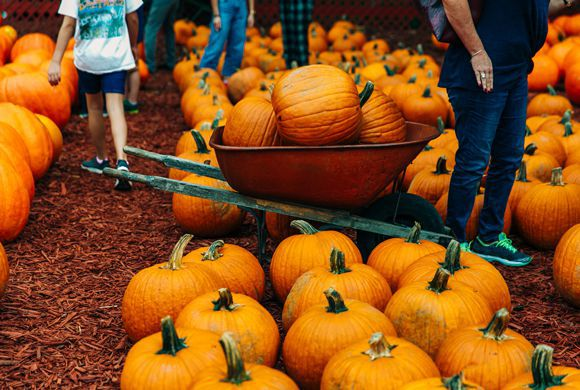 Pa. House Passes Agritourism Liability Bill