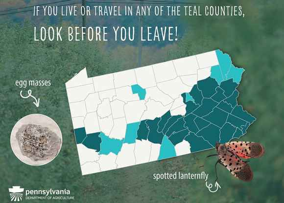Spotted Lanternfly Quarantine Area Expanded to Eight Counties