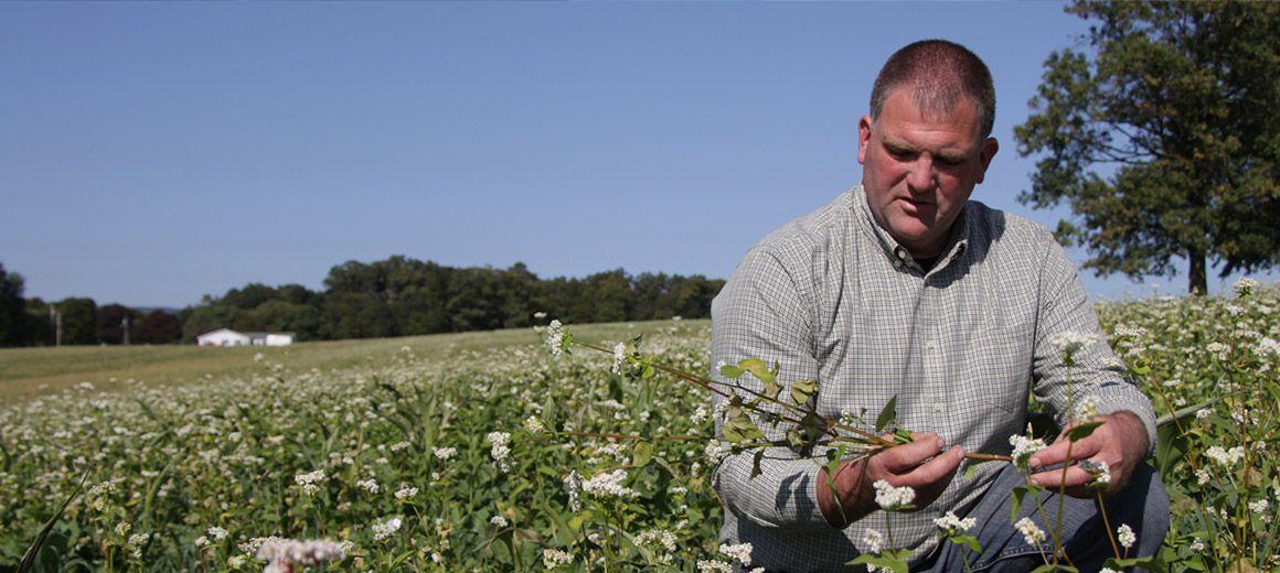 farmer examines field crop