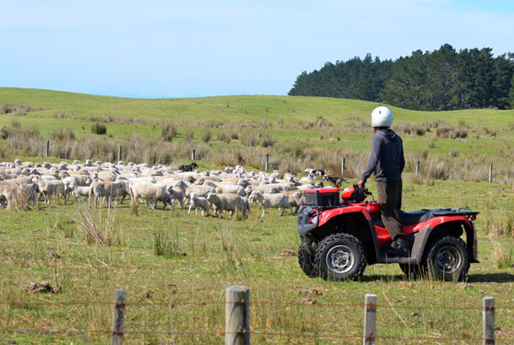 Forage Quality Impacts on Sheep and Goat Rations